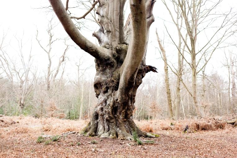 Winston-Rachel-Oates-EppingForest-1