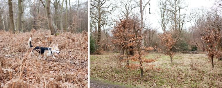 Winston-Rachel-Oates-EppingForest-3