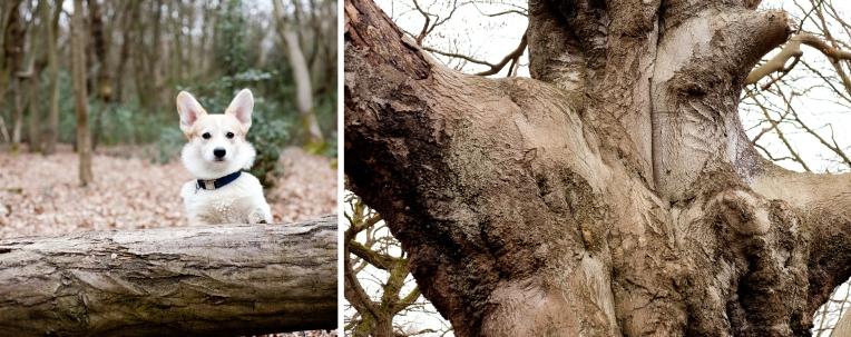Winston-Rachel-Oates-EppingForest-6
