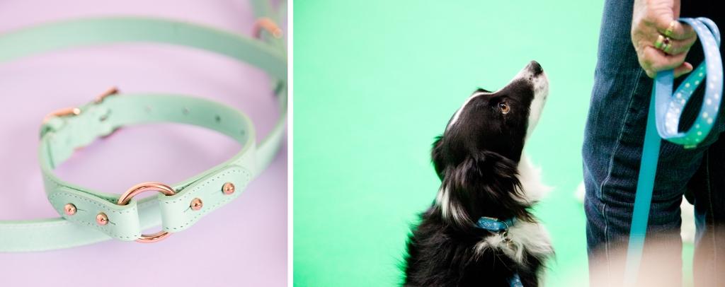 layout-Winnythecorgi-pet-photography-Rachel-Oates10