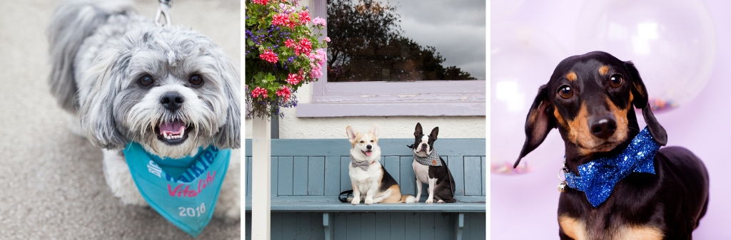 layout-winnythecorgi-pet-photography-rachel-oates3