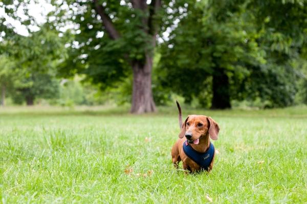 Hyde-Park-Pets-Rachel-Oates-2