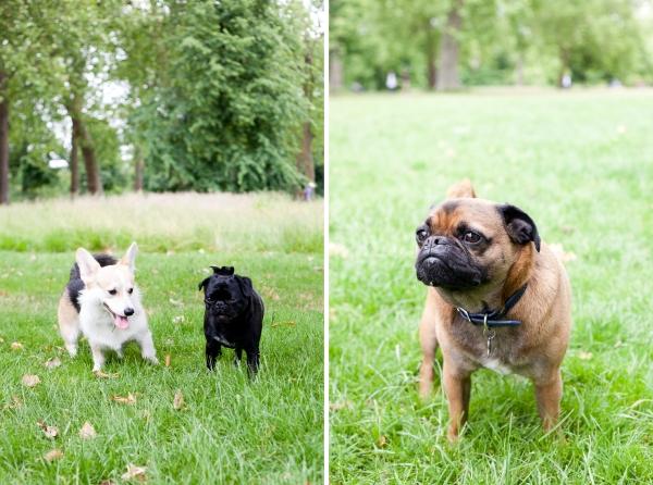 Hyde-Park-Pets-Rachel-Oates-3