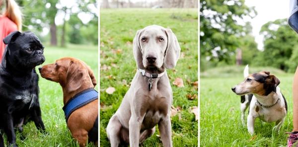 Hyde-Park-Pets-Rachel-Oates-4