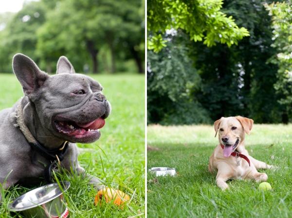 Hyde-Park-Pets-Rachel-Oates-5