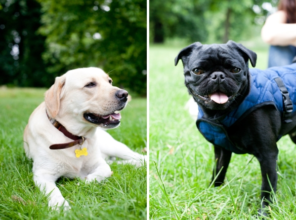 Hyde-Park-Pets-Rachel-Oates-6