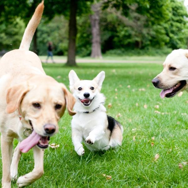 Hyde-Park-Pets-Rachel-Oates-7