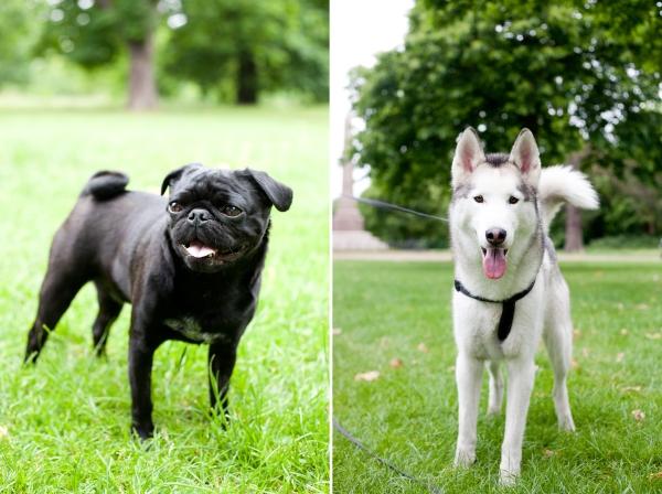 Hyde-Park-Pets-Rachel-Oates-8