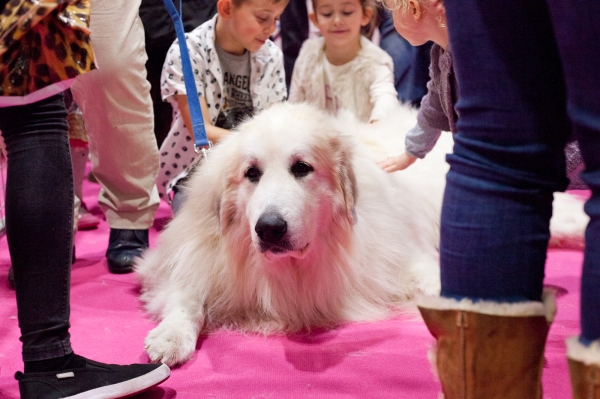 Discover-Dogs-Rachel-Oates-10