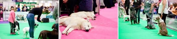 Discover-Dogs-Rachel-Oates-11