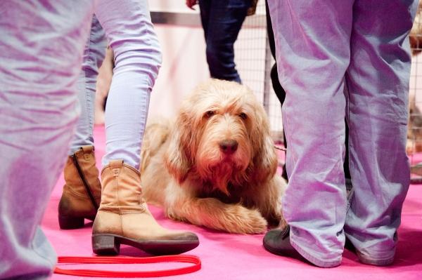 Discover-Dogs-Rachel-Oates-16