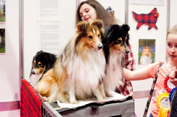 Discover-Dogs-Rachel-Oates-19