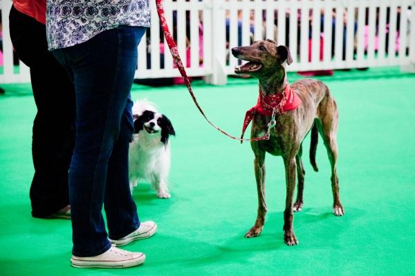 Discover-Dogs-Rachel-Oates-27