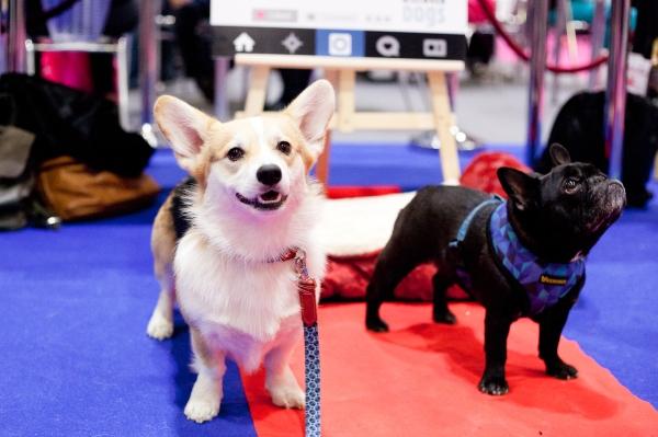 Discover-Dogs-Rachel-Oates-29