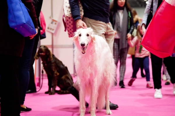 Discover-Dogs-Rachel-Oates-4