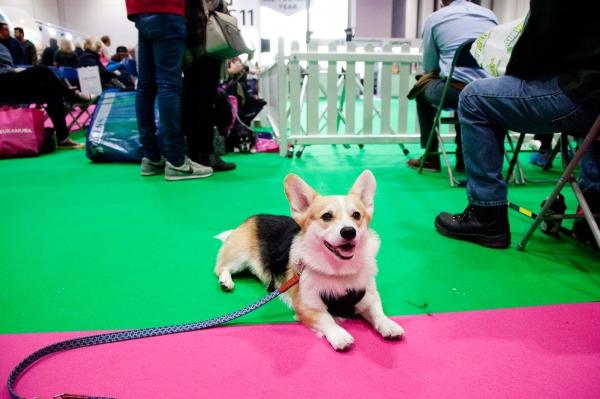Discover-Dogs-Rachel-Oates-6