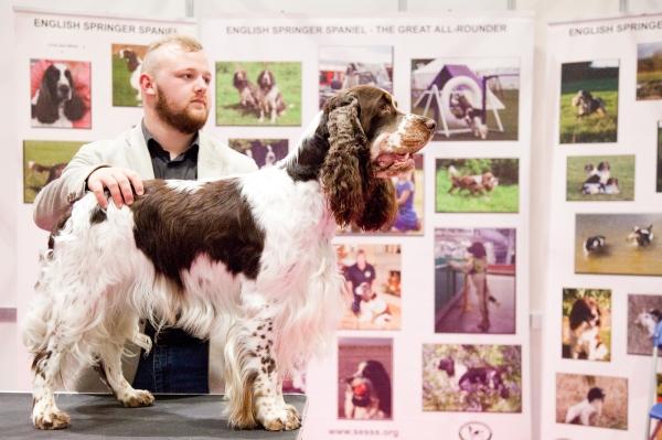 Discover-Dogs-Rachel-Oates-8