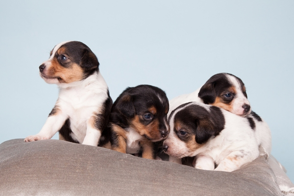 pupsters-therockster-racheloates-2