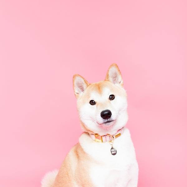 helloharriet-dogs-racheloates-1
