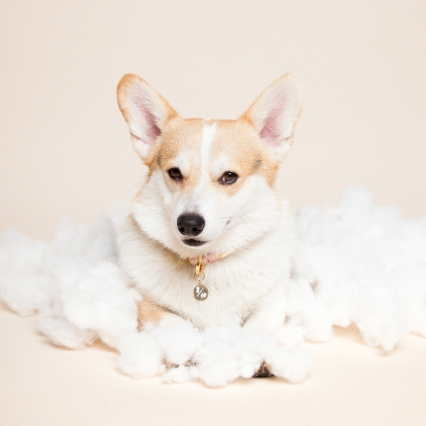 helloharriet-dogs-racheloates-5