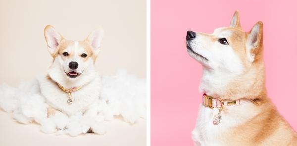 helloharriet-dogs-racheloates-8